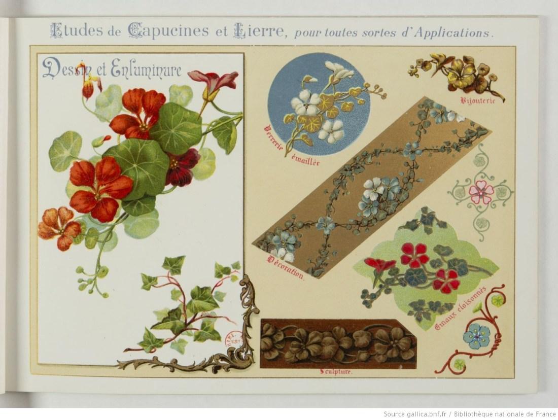 Fleurs_d'après_nature___par_[...]Guillot_Ernest_btv1b52512760g_13