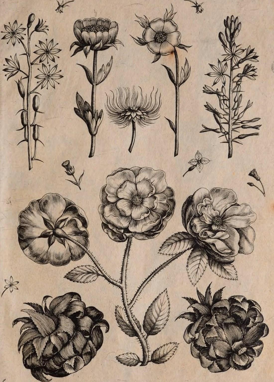 florilegium00coll_0013