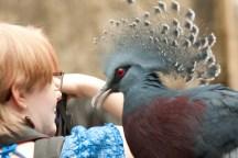Friendly Bird3