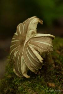 Mushroom2WM