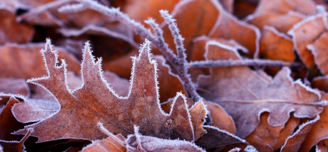 frozen leaves_crop