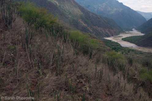 The Panachi or Parque Nacional del Chicamocha.