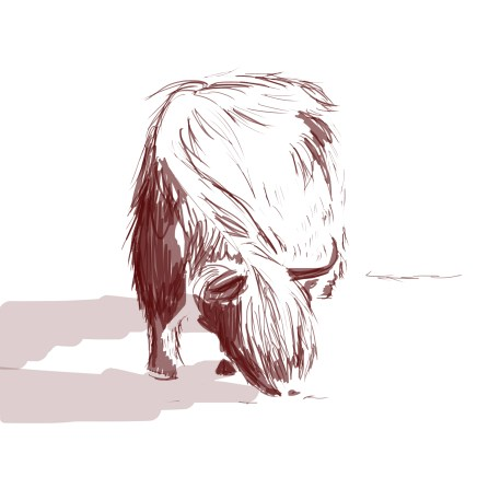 cow_3