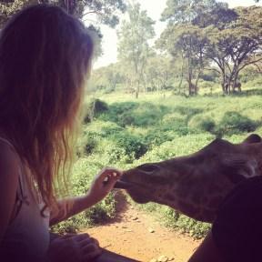 Feeding a giraffe at the Giraffe Center, Nairobi
