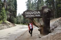 Sequoia & Kings Canyon NP
