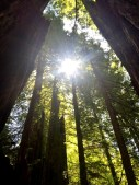 Redwoods National and State Parks