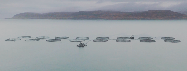 Salmon Farm Scotland