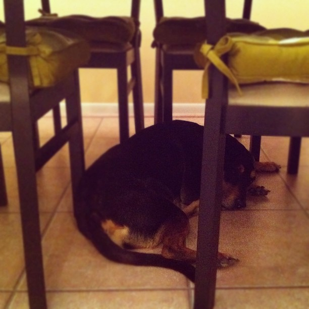 dog house under dining room table