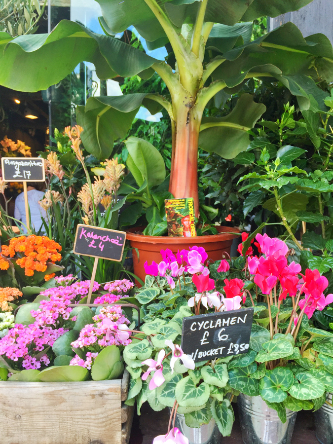 Beautiful flowers at a shop in London; check out this travel guide to the city!