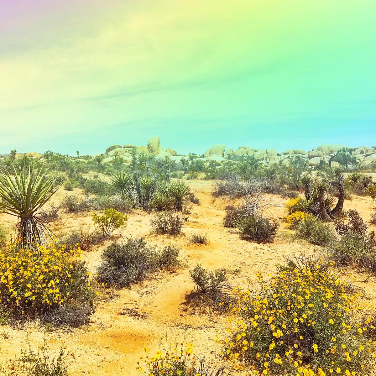 Dreamy desert scene from Joshua Tree National Park by @sarahhearts