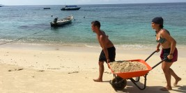 Hard labour -Janet & Jorge barrowing new sand to nesting site