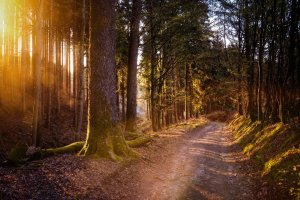forest, sun, warm