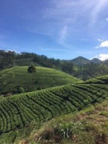 Sri Lanka train tea 5