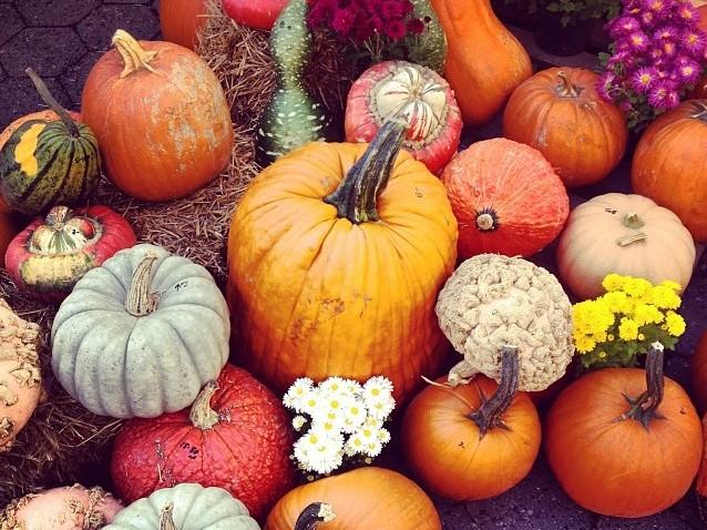 Fall Pumpkins New York