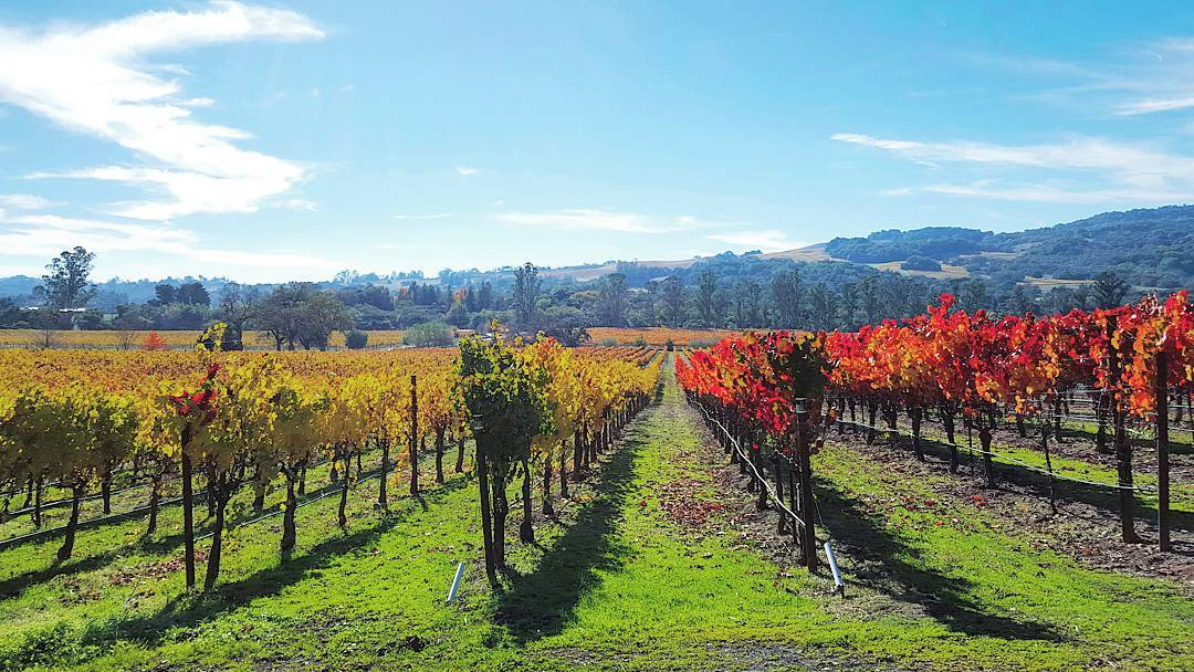 Wine Country For The Weekend? Add These Vineyards To Your List!