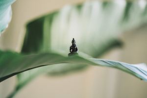 small figurine of budda on a green leaf