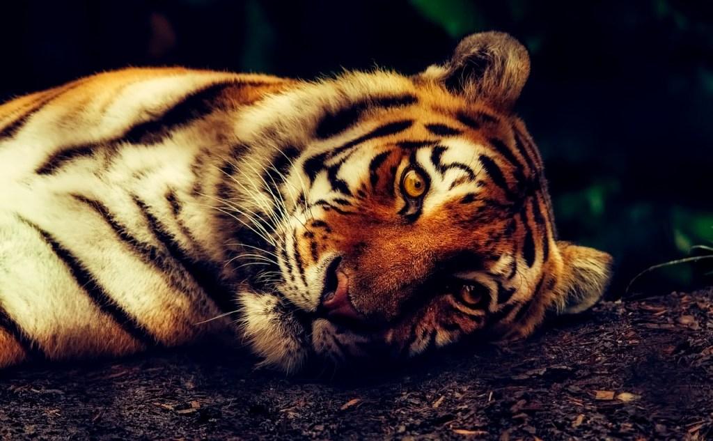 aladdin movie lesson raja tiger