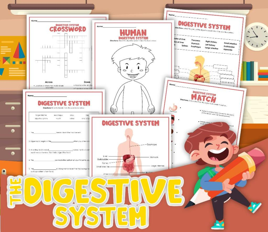 Informative Digestive System Study For Kids article cover image of full free printable set