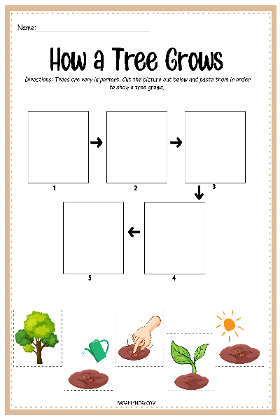 tree life cycle chart
