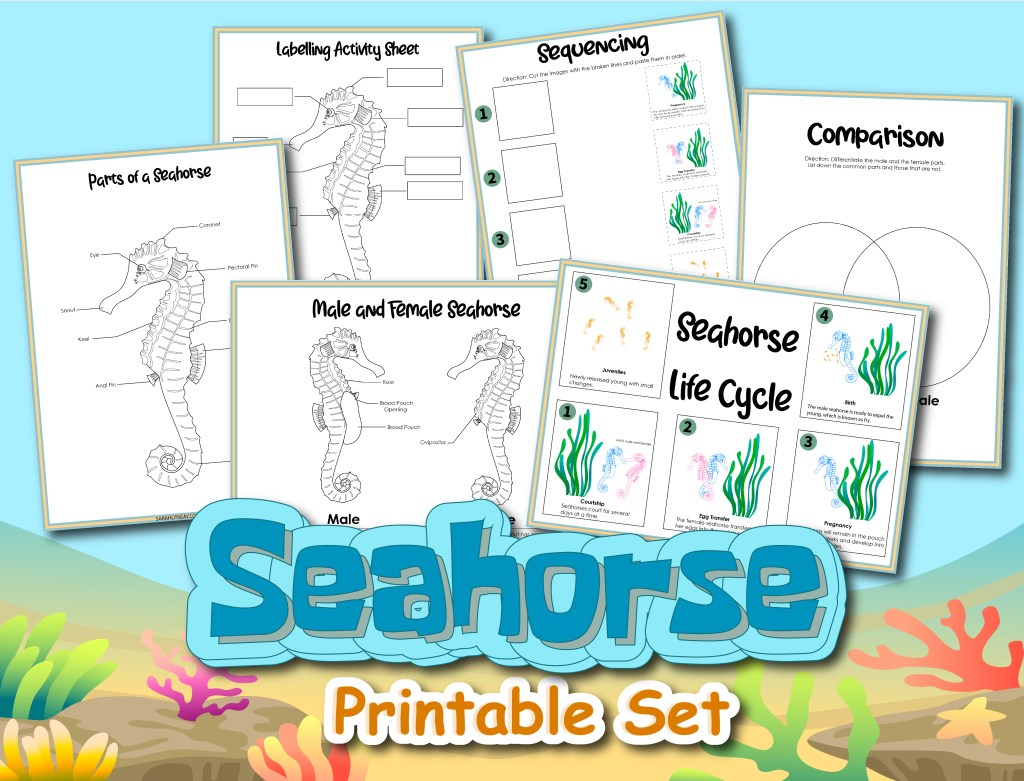 Bold and Beautiful: The Life Cycle of a Seahorse