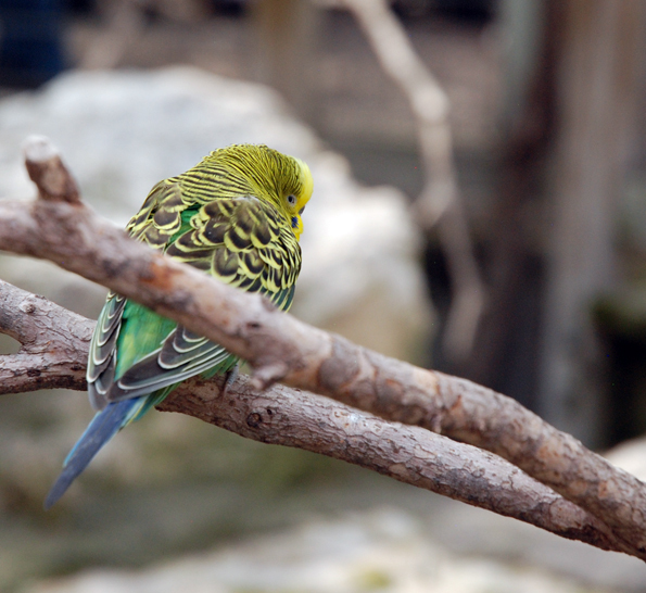 Bird at the Ft. Worth Zoo
