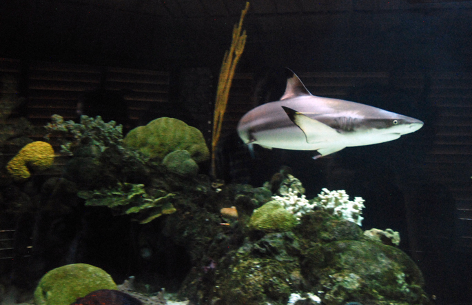 Shark at the Ft. Worth Zoo