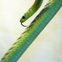 Snake at the Denver Zoo