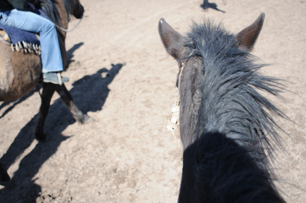Sparkly Shoes, Caballos and Tango (5/5)
