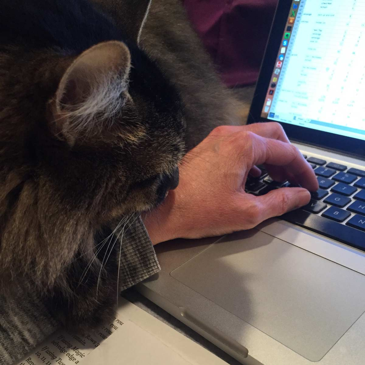 sam, a brown long haired tabby, helping sarah at a laptop