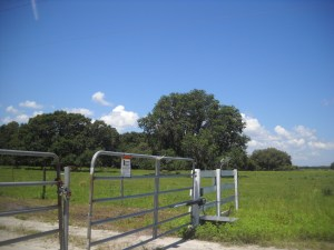 This is the gate Danny is  working on. It is in the BLAZING SUN most of the day.