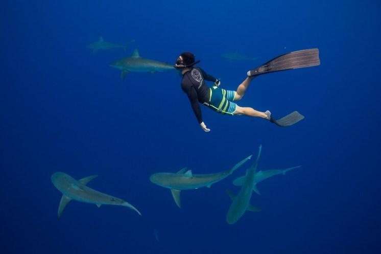 Shark dive 2 - Juan Oliphant OneOceanDiving.com