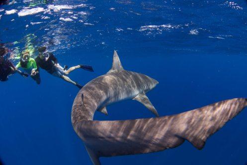 Shark dive 5 - Juan Oliphant OneOceanDiving.com