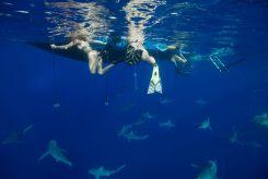 Shark dive 9 - Juan Oliphant OneOceanDiving.com