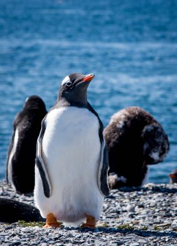 penguincutie