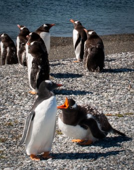 penguinfight