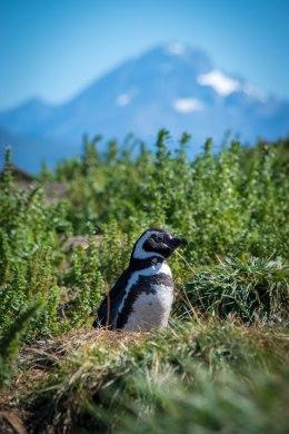 PenguinMtn