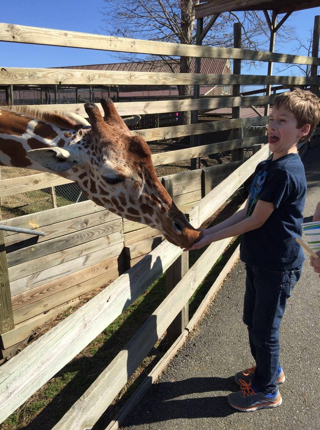 feed giraffes metro richmond zoo