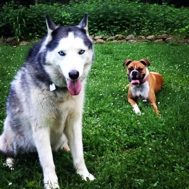 Humane Ct Dog Society Adoption