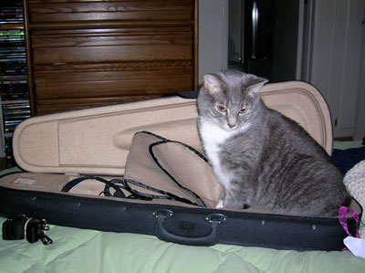 kitty playing in violin case