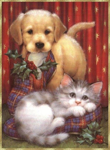 chat dans une pantoufle avec un chien