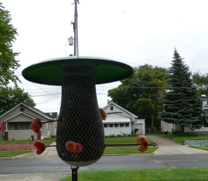 Green Mushroom Bird Feeder