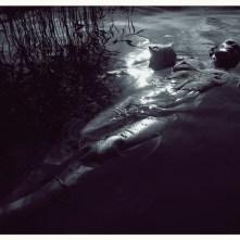 006-l'annegata