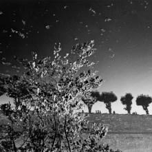 Mimmo-Jodice_Sully-Sur-Loire-590x471