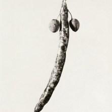 herbarium1