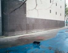 "Gus Powell ""Voetganger No. 049"" (2008)"