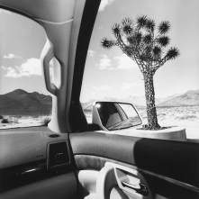 "Lee Friedlander, California, 2008, dalla serie ""America by Car"" Gelatin silver print, 37.5 × 37.5 cm Courtesy Fraenkel Gallery, San Francisco © Lee Friedlander, courtesy Fraenkel Gallery, San Francisco"