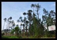perbatasan hutan pinus, memasuki area TN Gunung Merbabu