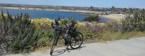 Scenic Cycle Mission Bay Bike Tours - WordPress Websites and Training - Sara Ohara