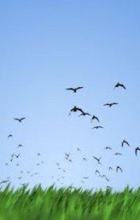 birds-come-to-school-sara-rayntt