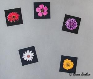 Flower photographs available as fridge magnets.